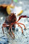 crayfish by SemioticPhotography