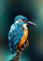 Kingfisher by Chimerum