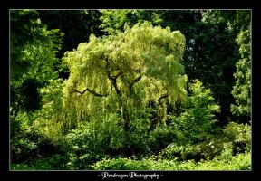 Stanley Park 6 by pendragon93