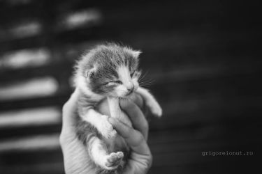 Little by MWPHOTO