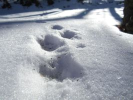 Rabbit Tracks In The Snow by Beaglesx2