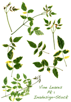 Vine Leaves Pk 1 - Stock by Inadesign-Stock