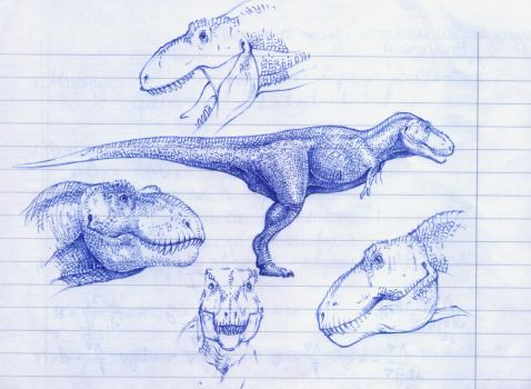 T. rex sketches by T-PEKC