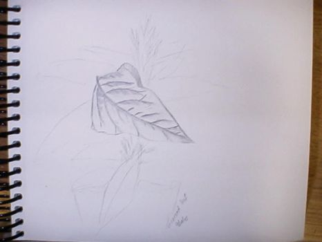 Leaf turning by Silvering