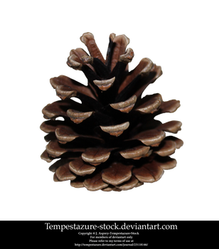 Pinecone 1-Stock by tempestazure-Stock