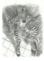 Zebra Anthro by Toledo-the-Horse