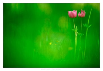 Silent Beauty by gilad