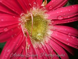 Pink Thrive by aspicer86