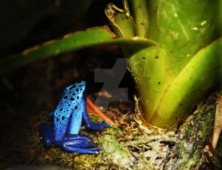 Electric Blue Frog by Medicated-Kitty