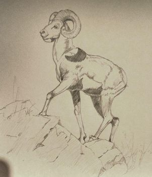 Goat by SentWest
