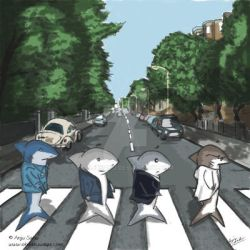 Sharks on Abbey Road by anjusabu