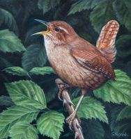 WREN. Oil on panel. by painterman33