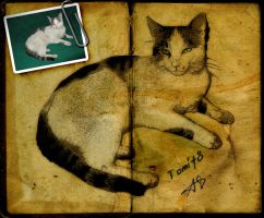 Tom the cat by dccanim