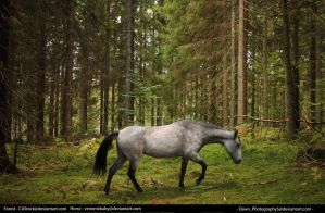 Horse in Forest by Dawn-Photography5