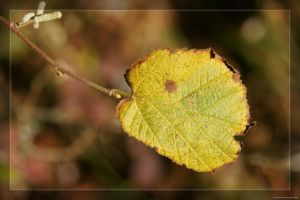 Tree leave autumn by hipe-0