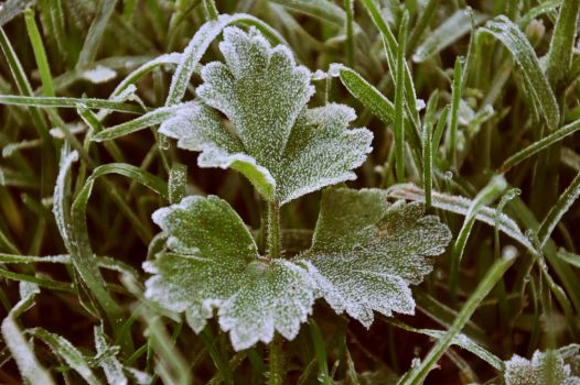 Frosty Beginings... by AndyPK