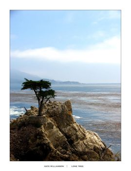 Lone Tree by katewphotography