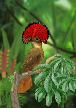 Royal Flycatcher (Digital Painting) by Rick-Lilley