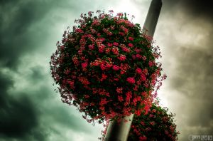Hanging flowers by PiTRiS