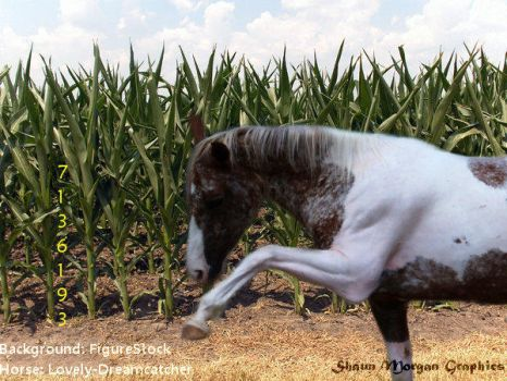 Horse Picture 7 by CocoQueenofCards