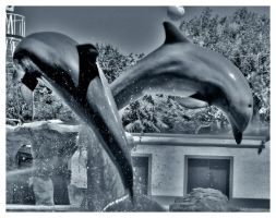 Dolphins by Misantropia