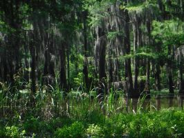 Cypress Forest #2 by flashback37