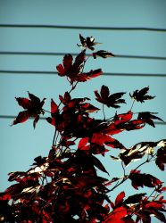 Burning Leaves II by TheDreamsOfTheAges