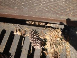 The Storm Drain by goopers-stock