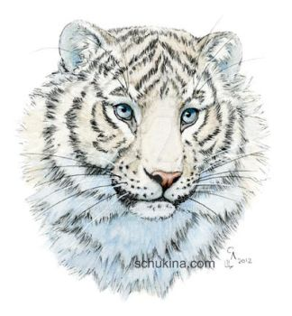 Young White Tiger by sschukina