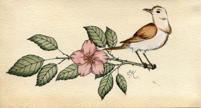 The Nightingale and the Wild Rose by Kitty-Grimm