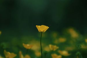 Yellow Flowers by Black-beads
