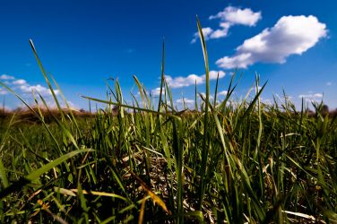 In the Grass by amg