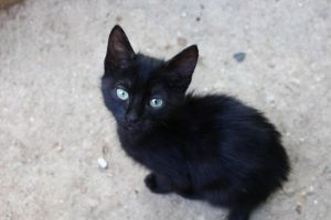 Black Cat by harucchine
