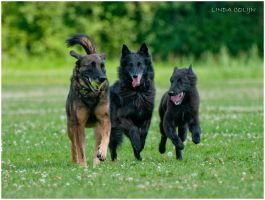 The Pack by KonikPolski