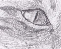 Rocky's Eye-Drawn by Readsway2much