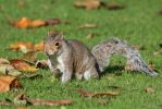 Squirrel Stock 03 by Malleni-Stock