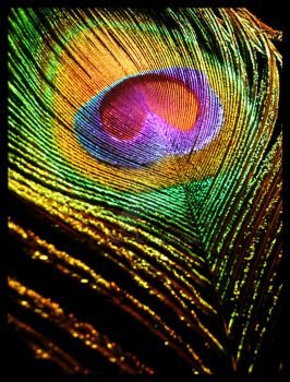 Peacock Feather by th3rdeye