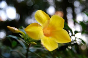 Yellow by oddjester