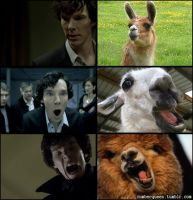 Sherlock Expressions by OrminLange