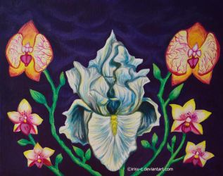 Orchids and iris by irisv-c