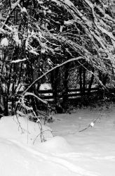 Winter Hallow by lillycalin