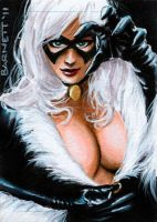 Black Cat... again by artguyNJ