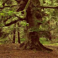 simply a tree by sternenfern