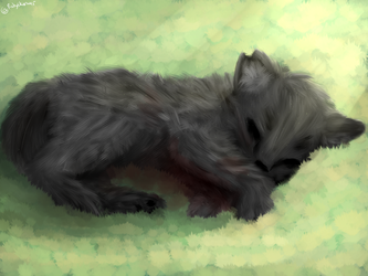 Realism drawing- Cat by TheMidnightstars45