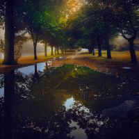 Autumn in a Puddle by nina-Y