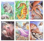 Sea Creature ACEO's by Kampfkewob