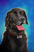 Hovis Portrait by AmberDust