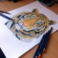 Super early teaser of my tigar drawing by AtomiccircuS