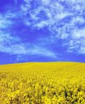 Field yellow STOCK by AStoKo by AStoKo