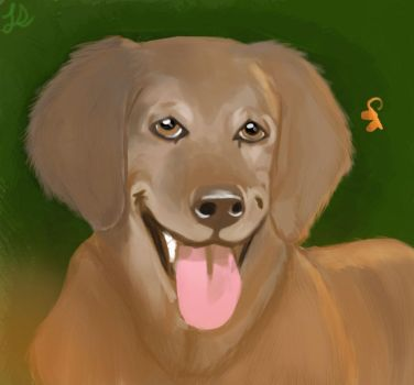 Golden Retriever Photo Study by LeahStars8
